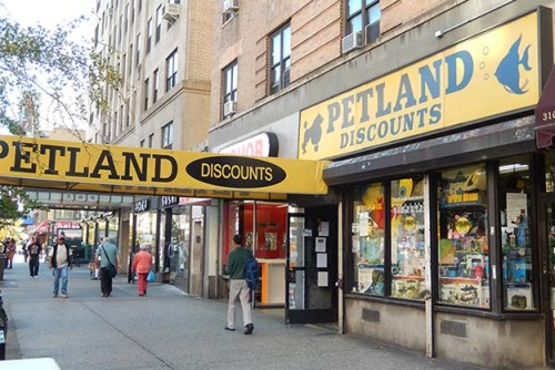 Lucky Luciano, Dutch Schultz, Owney Madden, Mad Dog Coll, Vincent Coll, Salvatore Maranzano, Mayor Jimmy Walker, Harlem Baby Massacre, Michael Vengalli, Joey Rao, Joseph Bonnano, Big Frenchy DeMange, Peter Coll , Petland Discounts, 312 West 23rd Street.